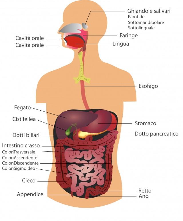 Gastroenterologia - W&B Poliambulatori Brescia